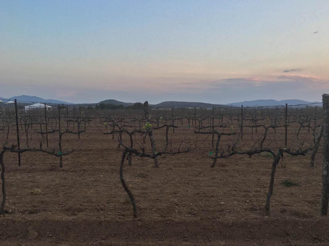 100 Vinos Méxicanos-3